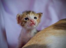 Котенок милый Стоковые Фото