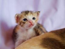 Котенок милый Стоковая Фотография