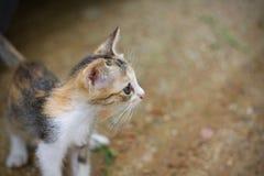 Котенок милый Стоковые Изображения
