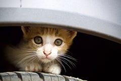 Котенок милый Стоковая Фотография RF