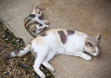 Котенок милый Стоковые Изображения RF