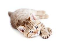 котенок младенца лежа довольно Стоковые Изображения