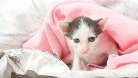 котенок младенца милый Стоковые Изображения RF