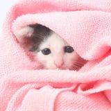 котенок младенца милый Стоковое Изображение RF