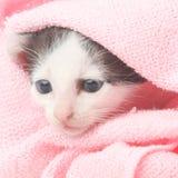 котенок младенца милый Стоковые Фотографии RF