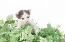 котенок младенца милый Стоковое фото RF