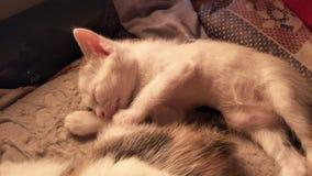 Котенок младенца Стоковая Фотография RF