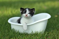 Котенок младенца Outdoors в траве Стоковое Изображение RF