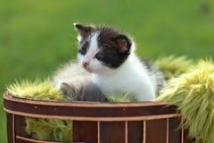 Котенок младенца Outdoors в траве Стоковые Изображения