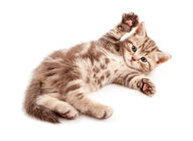 котенок младенца задний немногая лежа Стоковое фото RF