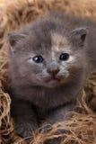 Котенок младенца лежа в корзине с отпрысками Стоковые Изображения