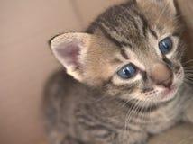 Котенок младенца 1 месяца Стоковые Изображения