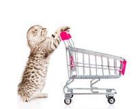 Котенок младенца с вагонеткой покупок белизна изолированная предпосылкой Стоковые Изображения RF