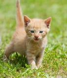Котенок младенца Стоковое фото RF