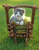 Котенок младенца Outdoors в траве Стоковое фото RF