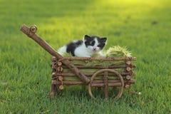Котенок младенца Outdoors в траве Стоковые Фотографии RF