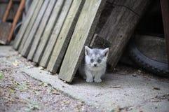 Котенок наблюданный синью смотря ослабленный Стоковые Фото