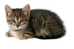 Котенок над белой предпосылкой Стоковое Изображение