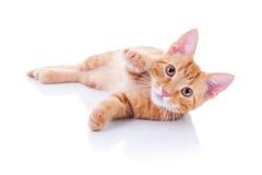 Котенок на белизне Стоковая Фотография