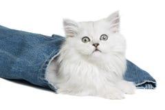 Котенок на белой предпосылке Стоковые Фото