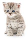 Котенок на белой предпосылке Стоковое Фото