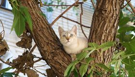 Котенок на дереве! Стоковая Фотография