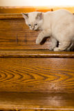 Котенок на лестницах Стоковое Изображение RF