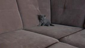 Котенок на кресле видеоматериал