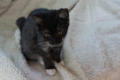 Котенок на одеяле Стоковые Фото
