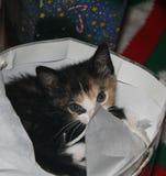 Котенок на рождестве 3 Стоковое Фото