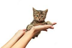 Котенок на руки Стоковые Изображения