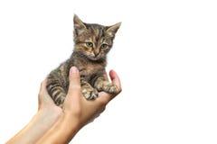 Котенок на руки Стоковые Изображения RF