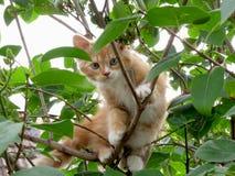 Котенок на сирени Стоковое Изображение