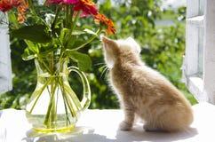 Котенок на силле окна Стоковое Изображение RF