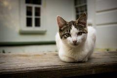 Котенок на солнечном утре Стоковые Изображения