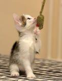 котенок немногая играя Стоковое Фото