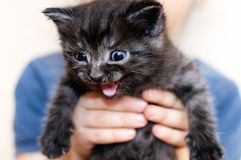 котенок немногая мяукая Стоковое фото RF
