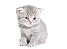 котенок немногая сидя Стоковое Фото
