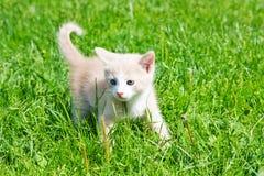котенок немногая Стоковое фото RF