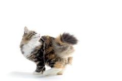 котенок немногая Стоковое Изображение RF