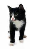 котенок немногая Стоковое Изображение