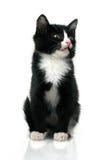 котенок немногая Стоковые Изображения