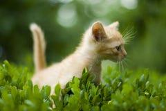 котенок немногая Стоковые Изображения RF