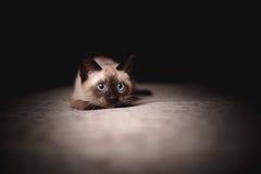 котенок немногая Стоковая Фотография
