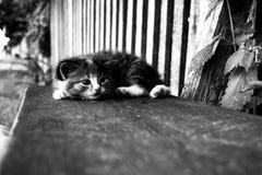 котенок немногая Стоковые Фото