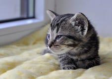 котенок немногая newborn Стоковое Изображение RF