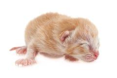 Котенок новорожденного стоковые изображения rf