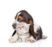 Котенок обнимать щенка гончей выхода пластов крошечный Изолированный на задней части белизны Стоковое фото RF