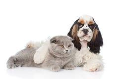 Котенок обнимать щенка Spaniel кокерспаниеля молодой изолированный на белом b Стоковые Фото
