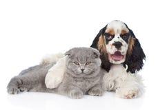 Котенок обнимать щенка Spaniel кокерспаниеля молодой Изолировано на белизне Стоковая Фотография RF